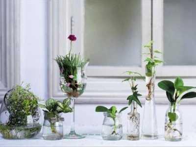 收到的鲜花怎么保存 怎么做才可以让它保持花期