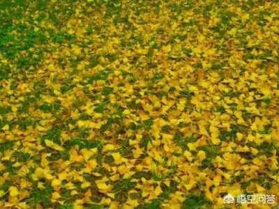 杨树叶能喂牛么 冬季杨树叶可以用来喂羊吗